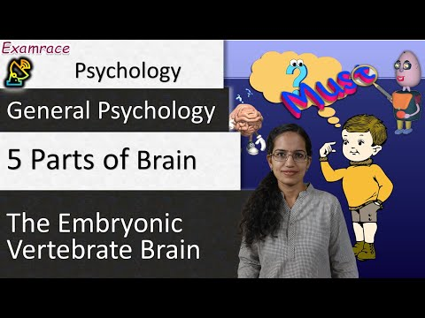 5 Parts of the Embryonic Vertebrate Brain