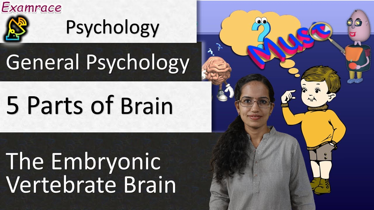 5 parts of the embryonic vertebrate brain youtube 5 parts of the embryonic vertebrate brain ccuart Images