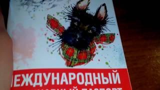 Дневник моей собаки и зачем нужен вет-паспорт