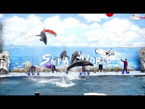 โชว์ปลาโลมา  Dolphin Show @ Safari World ( 19-07-2558)