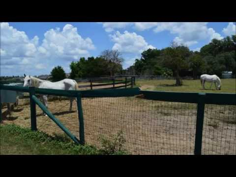 Al Marah Arabian Horses Farm Tour and Horseback Riding in Clermont