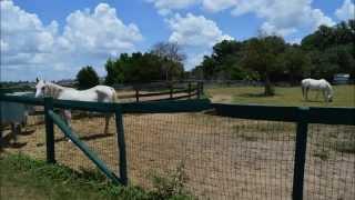 Al Marah Arabian Horses Farm Tour and Horseback Riding in Clermont