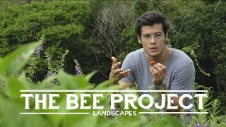 Avocado toast, Filipino honey and the importance of bees - Landscapes Episode 4