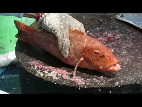 Amazing Cutting Live Fishes (Parrot Fish Squid Cuttlefish) At Sai Kung Seafood Market In Hong Kong