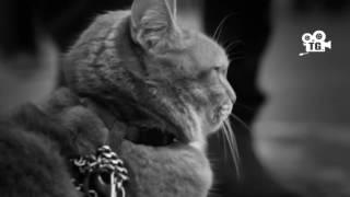 Кот спас наркомана от смерти Смотреть всем кто любит животных