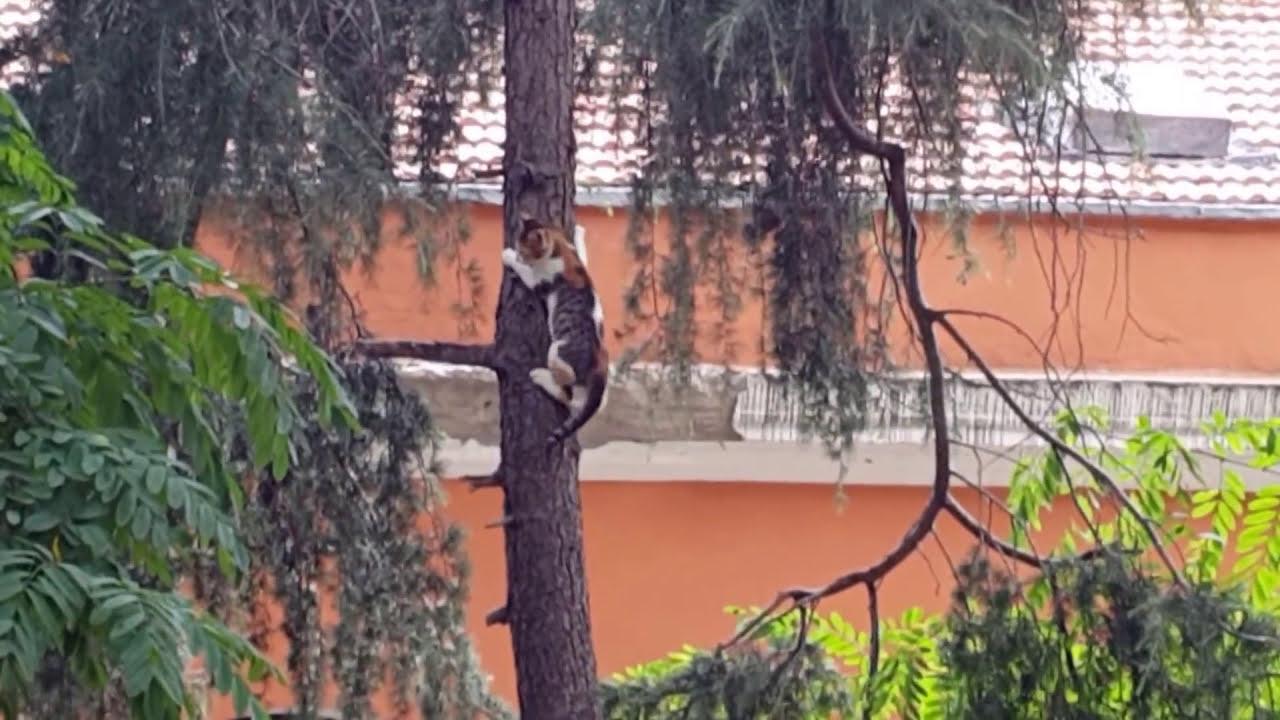 kuş avlayan kediler ile ilgili görsel sonucu
