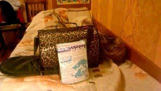 маленький видео обзор на кошачью переноску и пеленки для животных
