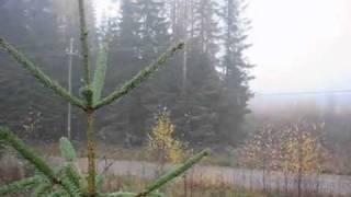 Охота на лося. Видео 6