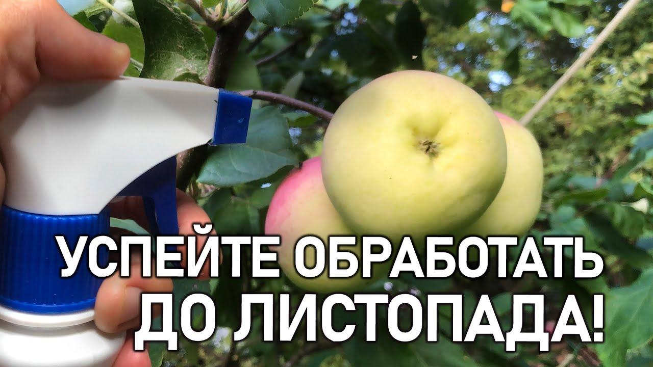 Защитите сад осенью от всех болезней и вредителей! Важная обработка!