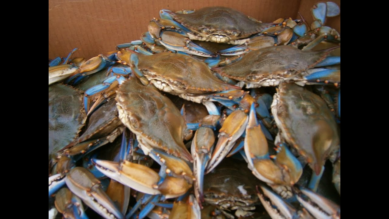 Where to buy blue crab : Any lab test now