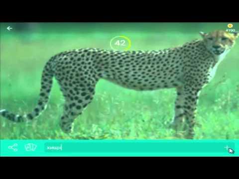 игра 94 процента уровень 55 картинка гепард