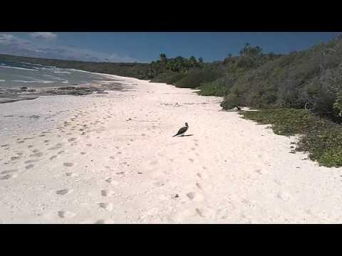 Henderson Island 6