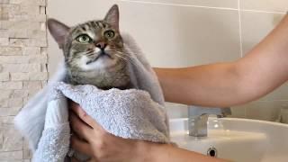 Kediler Yıkanıyor Eğlenceli Kedi Videoları