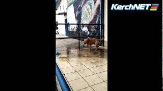 Керчанин привязал бойцовского пса возле магазина