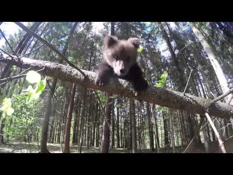 IFAW Bears of Summer - GoPro