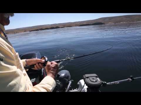 Fishing For Flaming Gorge Reservoir Kokanee & Rainbows