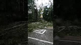 Десятки поваленных деревьев на дороге Нерехта-Кострома (15.07.2020).