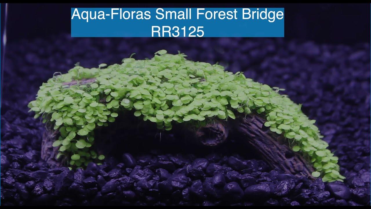 AquaFloras Small Forest Bridge - RR3125