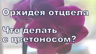 видео Как обрезать засохший цветонос орхидеи - уход за цветами фаленопсиса