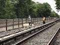Pair of Runaway Goats Caught Wandering on Subway Tracks