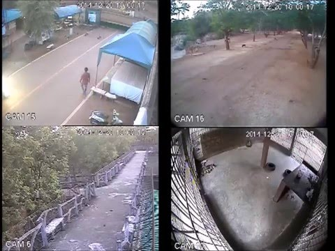 Tiger Temple - CCTV Evidence 1 Illegal Wildlife Trade 20th December 2014