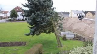 OKTOBER 2017!! Orkan Xavier in Berlin knickt Baum um! Sturmschaden