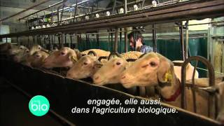 Un élevage de brebis bio