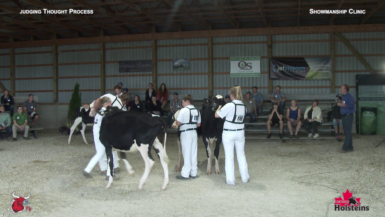 Showmanship Judging Video – Your Guide To Judging Dairy