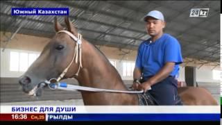 Элитные породы лошадей разводят в Южном Казахстане