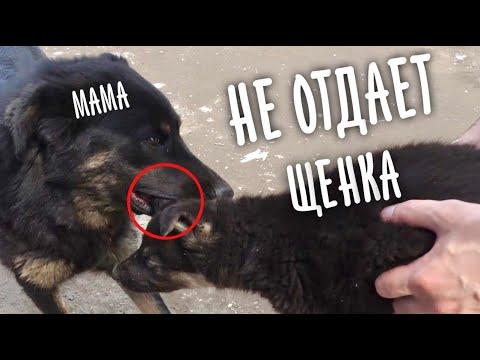 Вырвали щенка у матери.