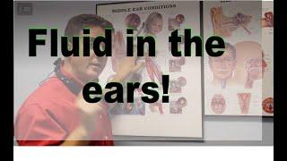 Middle Ear Fluid