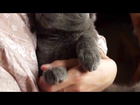 Couper Les Griffes De Son Chat