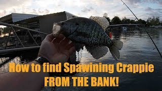 #CrappieFishing FROM THE BANK! How to find them.