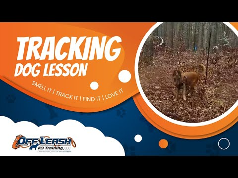 Man Tracking Virginia | Virginia Dog Tracking | Search and Rescue Dog Training Virginia