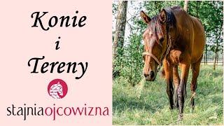 Konie i tereny Stajni Ojcowizna