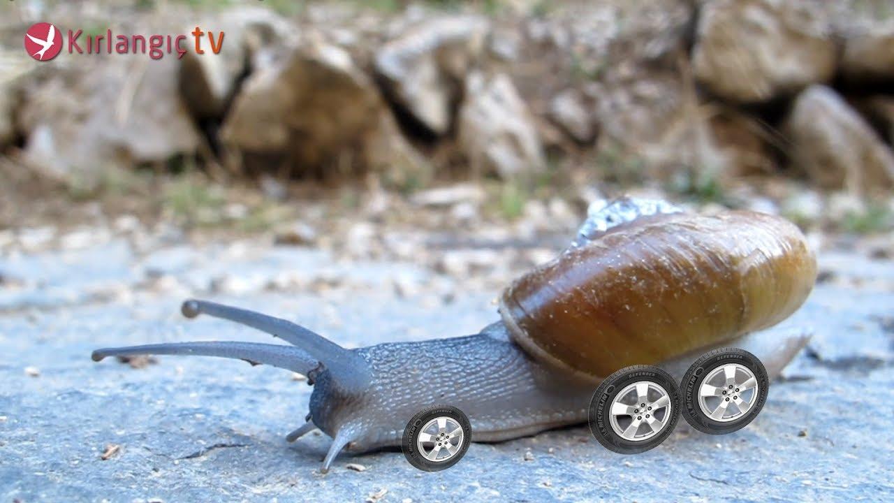 Hızlandırılmış Salyangoz Videoları - Hayvanlar Alemi Çocuklar için Salyangozlar