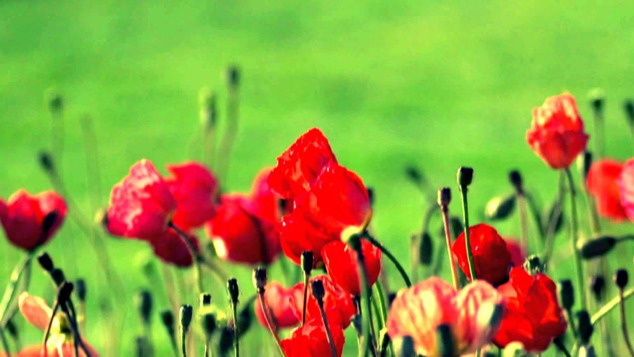 Fotos De Flores Preciosas. Preciosas Flores. Keukenhof