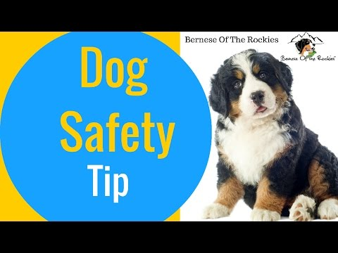 Night Time Dog Safety Tip