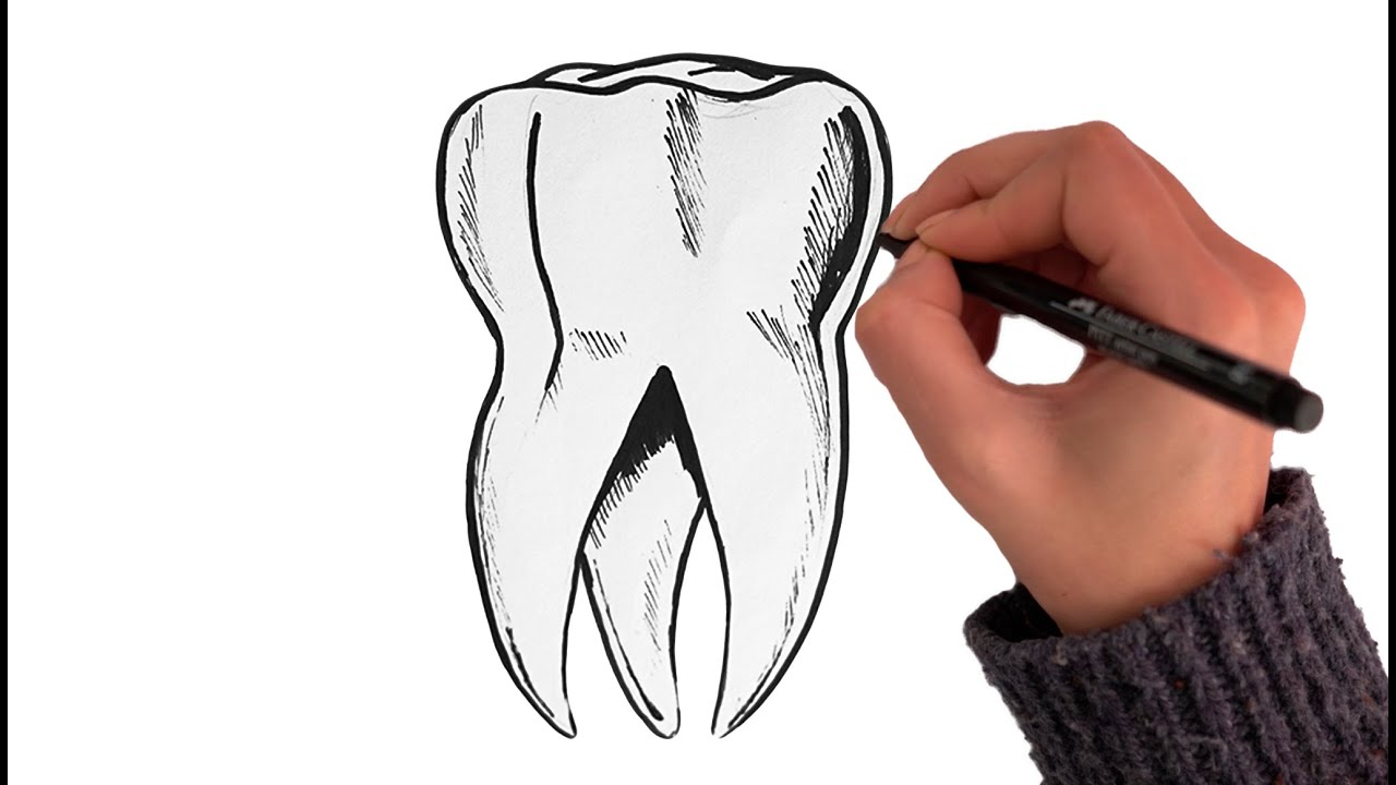 How to Draw a Tooth 🦷 (Back Molar)
