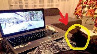 Кот смотрит видео. Классная реакция кота на ролик с птицами
