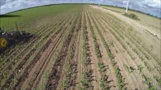 FPV in Florida Farmlands