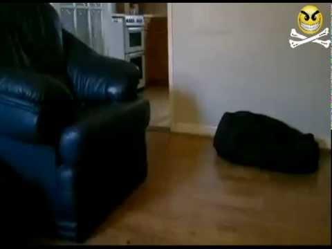 Dog FAIL!!!