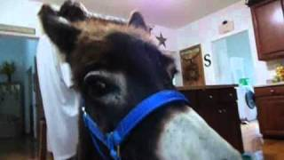 Is that a donkey in your house? Why yes, yes there is! lol