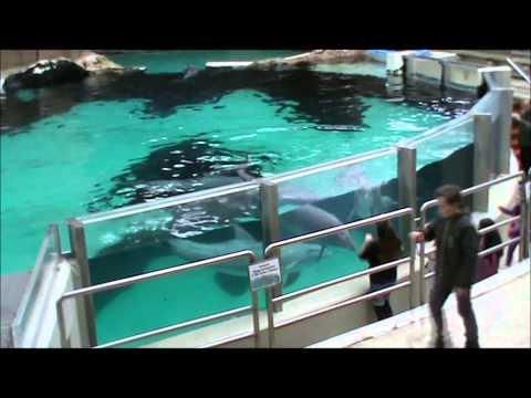 Entertaining Dolphins - Anti-Cap - Duisburg