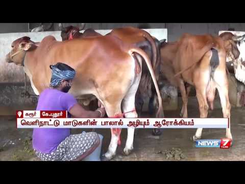 People show interest to buy organic milk at Karur | News7 Tamil