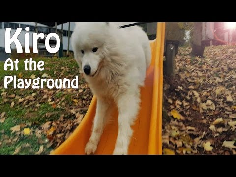 Kiro at the Playground