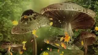 Nghệ Sĩ Lệ Thủy & Minh Vương Ca - Hai Kỷ Niệm Một Chuyến Đi