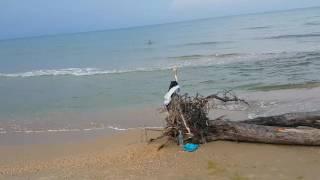 Видео отчёт по морю в Витязево 26.08.2016 7.30 утра