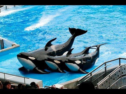 Show das Baleias, Sea World Orlando, Viajem a Walt Disney World. Estados Unidos, Flórida.