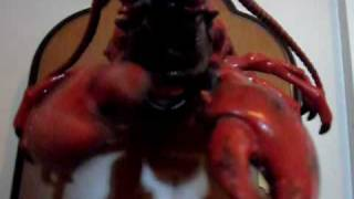 Singing Larry The Lobster (new Camera)